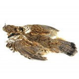 MFF Ruffed Grouse Skin