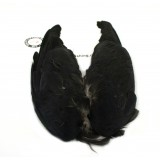 MFF Jackdaw Wings